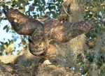 44 great_horned_owl_arlene_koziol_glamor